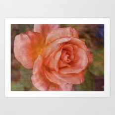 Simply A Rose Art Print