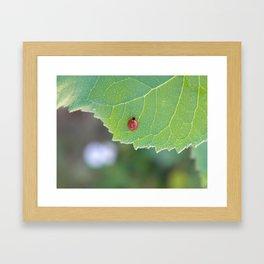 Ladybug friend Framed Art Print