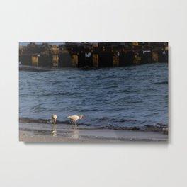 Ibises on the Beach Metal Print