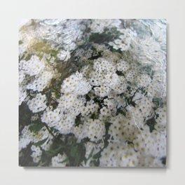 White Spirea Metal Print