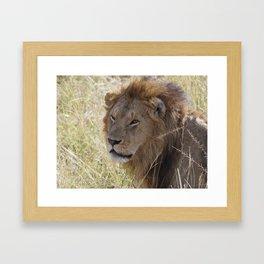Peaceful lion face Framed Art Print