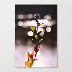 Vixen Canvas Print