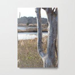 Old Tree on the Wetlands Metal Print
