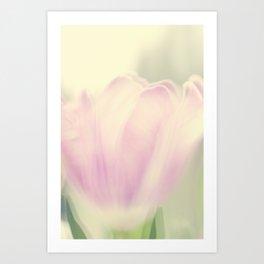 Tulips 4 Art Print