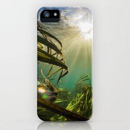 Through the Wild iPhone Case