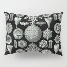 Ernst Haeckel - Hexacorallia Pillow Sham