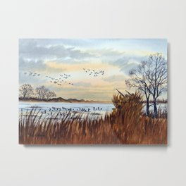 Duck Hunting Season Begins For The Canvasback Metal Print
