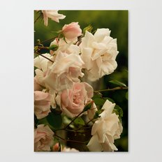 A Bed of Roses Canvas Print