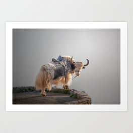 A yak in the Caucasus Mountains Art Print