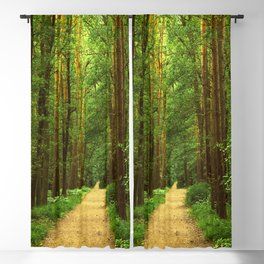 Forest path Blackout Curtain