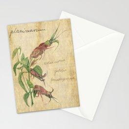 Planimarium - astacoidea justicia brandegeeana Stationery Cards