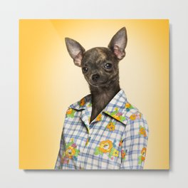 Chihuahua wearing a floral shirt Metal Print