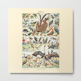 Wild Birds // Oiseaux by Adolphe Millot 19th Century Science Textbook Diagram Artwork Metal Print
