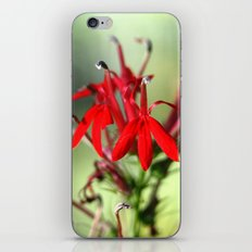 Cardinal Flower iPhone & iPod Skin