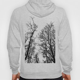 Naked trees silhouette on bloody clouds Hoody