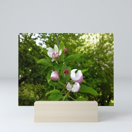 Apple Blossoms In Spring Time Mini Art Print