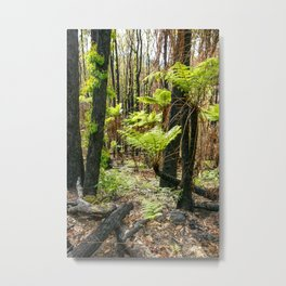Rebirth After Bush Fire, Country Victoria Metal Print