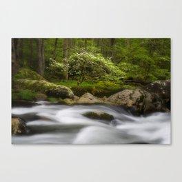 Dogwood Bonsai Tree Canvas Print