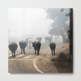 Water Buffalo Walking Metal Print