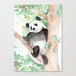 Panda, Hanging Out Canvas Print