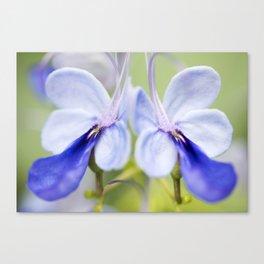 Blue Glory Bower Canvas Print