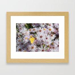 Colorado Wildflower #735 Framed Art Print