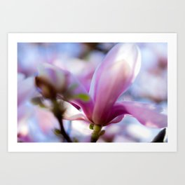 Springflower Art Print