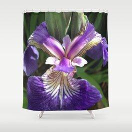 Alaska Wild Iris by Mandy Ramsey, Haines, Alaska Shower Curtain