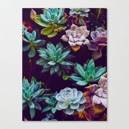 Colorful Succulent Cactus Plants Garden Canvas Print