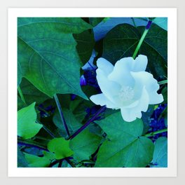 Cotton Blossom Art Print