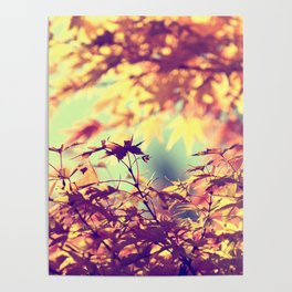 SUBTLE MAPLE - AUTUMN TEAL Poster