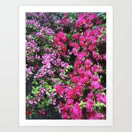 Late Bloomers Art Print