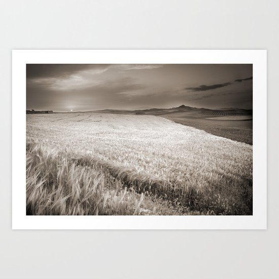 Windy at the cereal fields at sunset Art Print