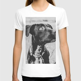Wheatfield Dog Portrait // Sharing Memories with A Best Friend Such Amazing Eyes T-shirt