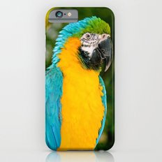 Blue and Gold Macaw Parrot iPhone 6s Slim Case