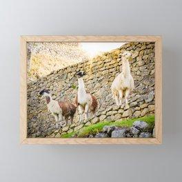 Llamas at Machu Picchu Framed Mini Art Print
