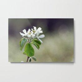 Malus flowers - spring 30 Metal Print