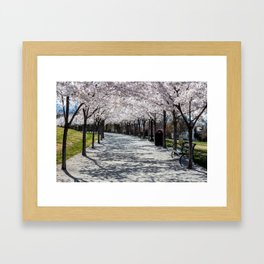 Cherry Blossoms Bloom along Sandy Path at Utah State Capitol Framed Art Print