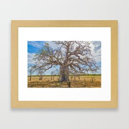 Boab and clouds Framed Art Print
