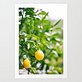The lemon tree Art Print