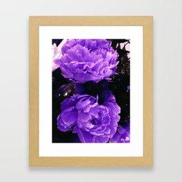 Peony Ultra Violet Framed Art Print