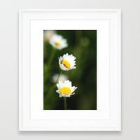 daisies Framed Art Prints featuring daisies by Hannah