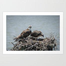 Ospreys Nesting 4 Art Print