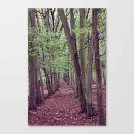 Woodland Trees. Canvas Print