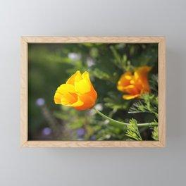 Sunlit Eschscholzia californica Framed Mini Art Print
