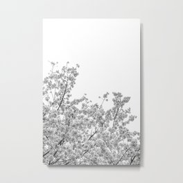 Cherry Blossoms (Black and White) Metal Print
