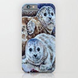 Harbor Seals of Monterey Bay iPhone Case