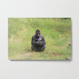 Gorilla Sitting Down Metal Print
