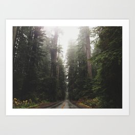Redwoods in Prairie Creek Art Print