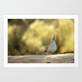 Crested Pigeon Art Print